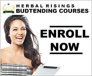 budtending courses