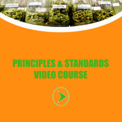 cannabis video course