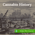 history of cannabis certificate