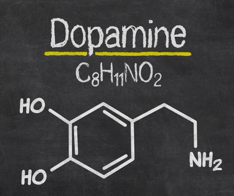 dopamine vs thc